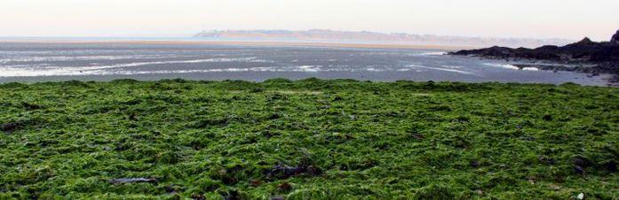 En Bretagne, la liberté d'informer sur l'agroalimentaire est menacée