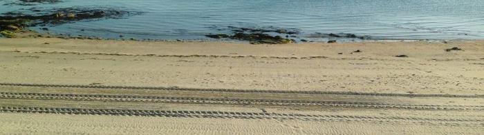 Le nettoyage mécanique des plages dévaste leur biodiversité