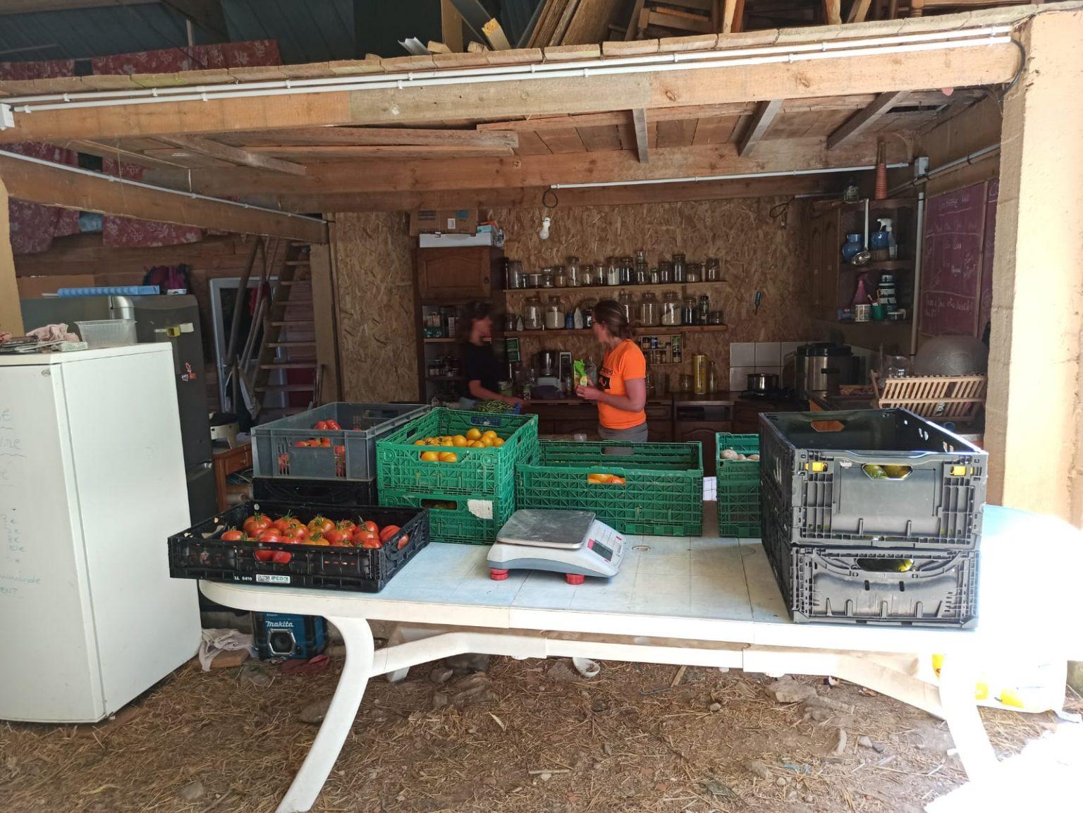 Entretien aux Jardins de Scoulboch, ferme biologique à Pluvignier